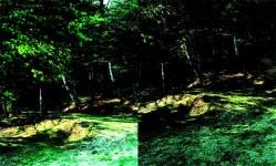 """Kenshu Shintsubo,""""forest / field"""" for ATAK017 (2008-12)"""